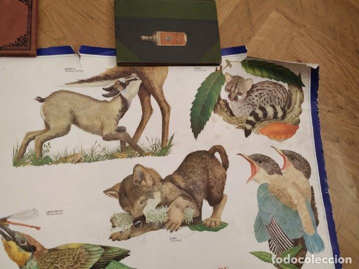 Coleccionismo Calendarios: CALENDARIO FAUNA DE CASTILLA Y LEÓN Y EXTREMADURA - CAJA DUERO 1988 - Foto 4 - 189311056