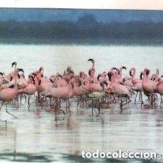 Collezionismo Calendari: -51896 CALENDARIO FLAMENCOS ROSAS, AÑO 2008, CON PUBLICIDAD, ANIMALES, EXTRANJERO, AVES, PÁJAROS. Lote 190820586
