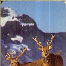 Coleccionismo Calendarios: CALENDARIO DE SERIE - 1991 - ED 547. Lote 244909825