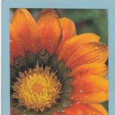 Coleccionismo Calendarios: CALENDARIO 2011 - LLIBRERIA CLARET (EN CATALAN) - LIBRERIA. Lote 294501413