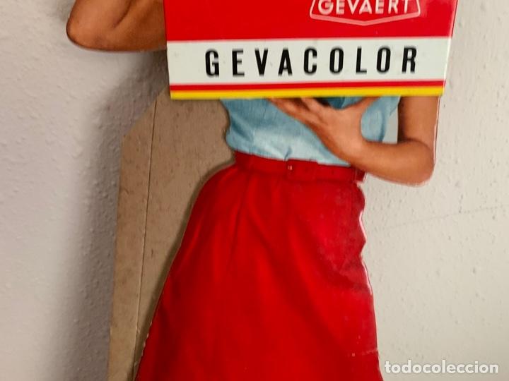 Cámara de fotos: GEVAERT GEVACOLOR PUBLICIDAD AÑOS 60 CARTON - Foto 3 - 182793133