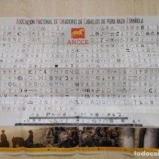 Affiches Foire: PÓSTER 67 X 97 CMS HIERROS DE ASOCIACIÓN NACIONAL DE CRIADORES DE CABALLOS DE PURA RAZA ESPAÑOLA.. Lote 206979382