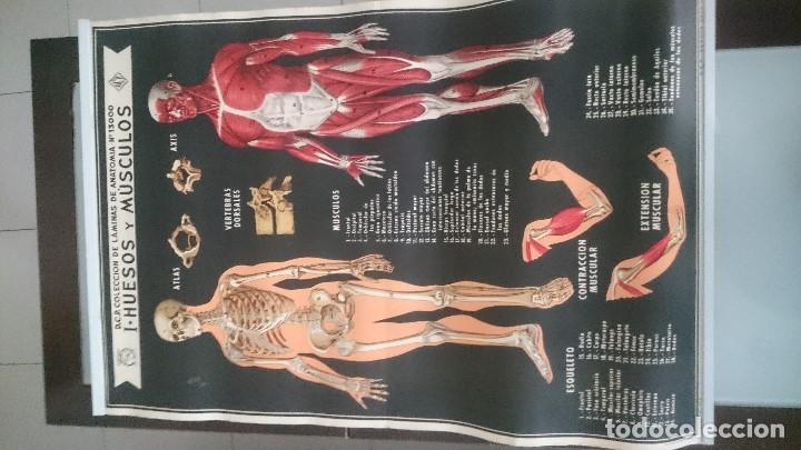 cartel anatomia humana. 1970 - Comprar Carteles antiguos, Chapas y ...