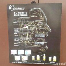Carteles: CARTEL EL NERVIO TRIGEMINO - LABORATORIOS CLARBEN - PLÁSTICO RÍGIDO EN RELIEVE , 58 X 50 CM. Lote 151957922
