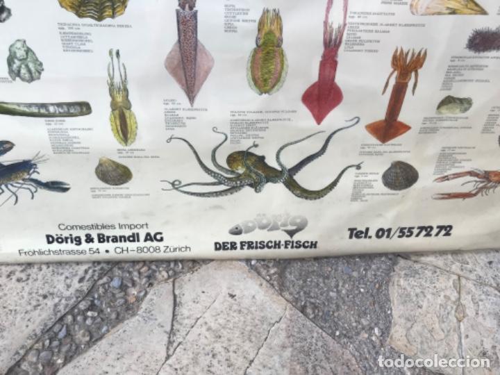 Carteles: Antiguo Cartel Especies de Moluscos y Crustáceos. Zurich. Marisco. Acuario. Pescadería. Pescador. - Foto 3 - 181434250