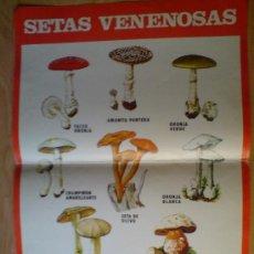 Carteles Publicitarios: CARTEL ICONA --- SETAS VENENOSAS (H. FOURNIER) (VER IMÁGEN ADICIONAL). Lote 32999805