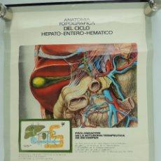 Carteles Publicitarios: CARTEL PUBLICITARIO LABORATORIOS ALMIRALL-ANATOMIA TOPOGRAFICA DEL CICLO HEPATO ENTERO HEMATICO. Lote 205150361