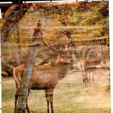 Carteles de Turismo: ANTIGUO CARTEL DE TURISMO DE ARGENTINA AÑOS 60. Lote 26563397