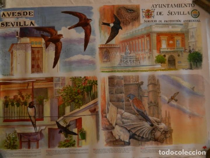 CARTEL AVES DE SEVILLA I - AYUNTAMIENTO DE SEVILLA 2004. MEDIDAS 70X50 CM. (Coleccionismo - Carteles Gran Formato - Carteles Turismo)
