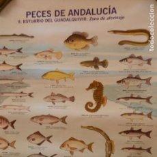 Carteles de Turismo: CARTEL PECES DE ANDALUCIA II ESTUARIO DEL GUADALQUIVIR: ZONA DE ALEVINAJE- AÑO 2000 - MED.1X70. Lote 165242298