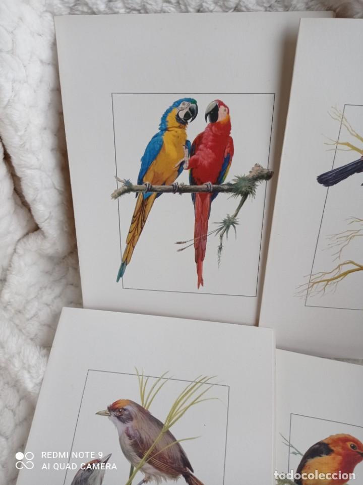 Carteles de Turismo: Lote 10 postales. Aves de Brasil. Rutas internacionales Varig - Foto 2 - 239822430