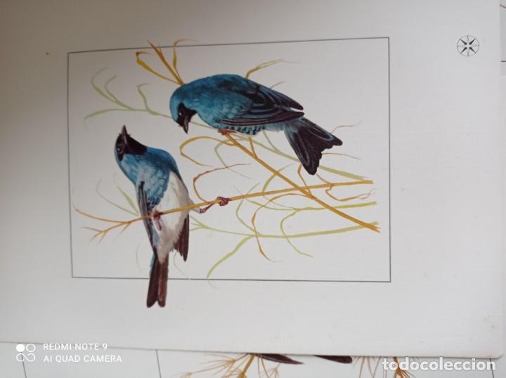 Carteles de Turismo: Lote 10 postales. Aves de Brasil. Rutas internacionales Varig - Foto 6 - 239822430