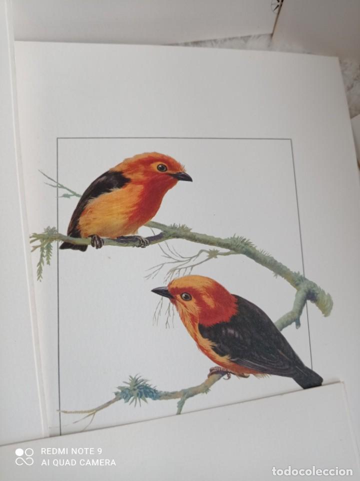 Carteles de Turismo: Lote 10 postales. Aves de Brasil. Rutas internacionales Varig - Foto 7 - 239822430