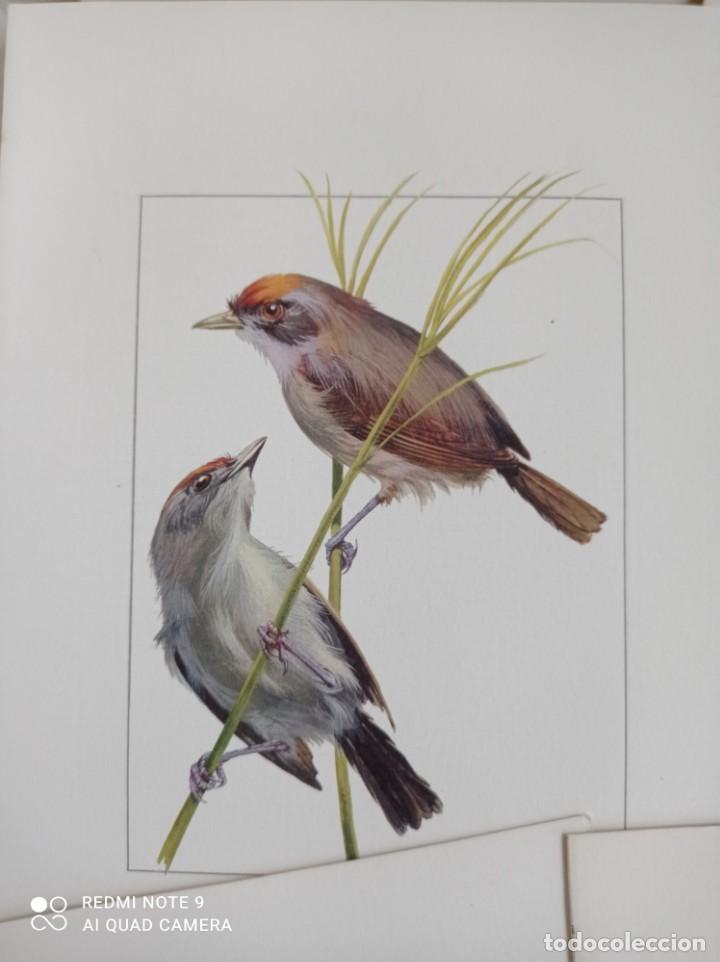 Carteles de Turismo: Lote 10 postales. Aves de Brasil. Rutas internacionales Varig - Foto 8 - 239822430