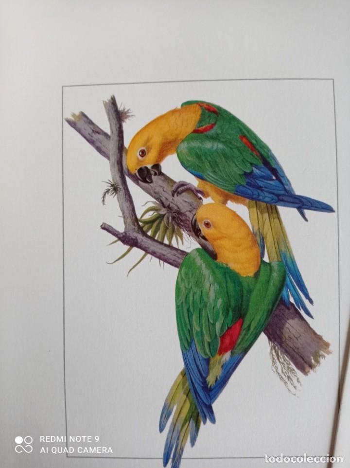 Carteles de Turismo: Lote 10 postales. Aves de Brasil. Rutas internacionales Varig - Foto 9 - 239822430