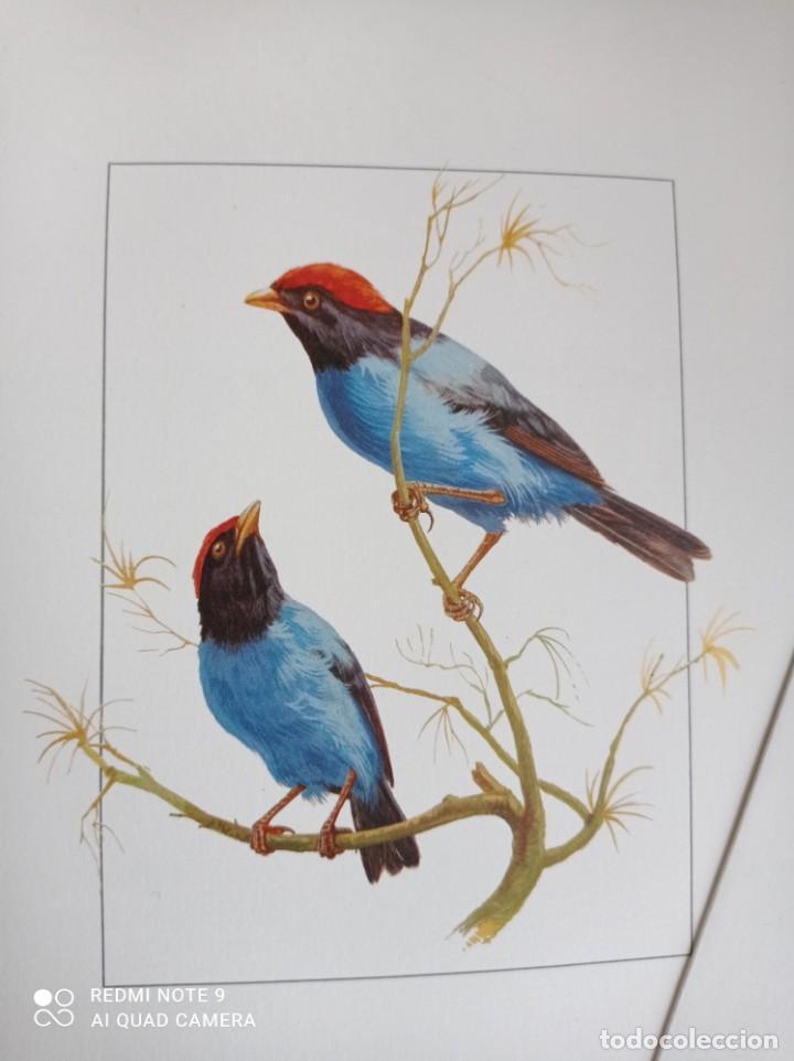 Carteles de Turismo: Lote 10 postales. Aves de Brasil. Rutas internacionales Varig - Foto 10 - 239822430