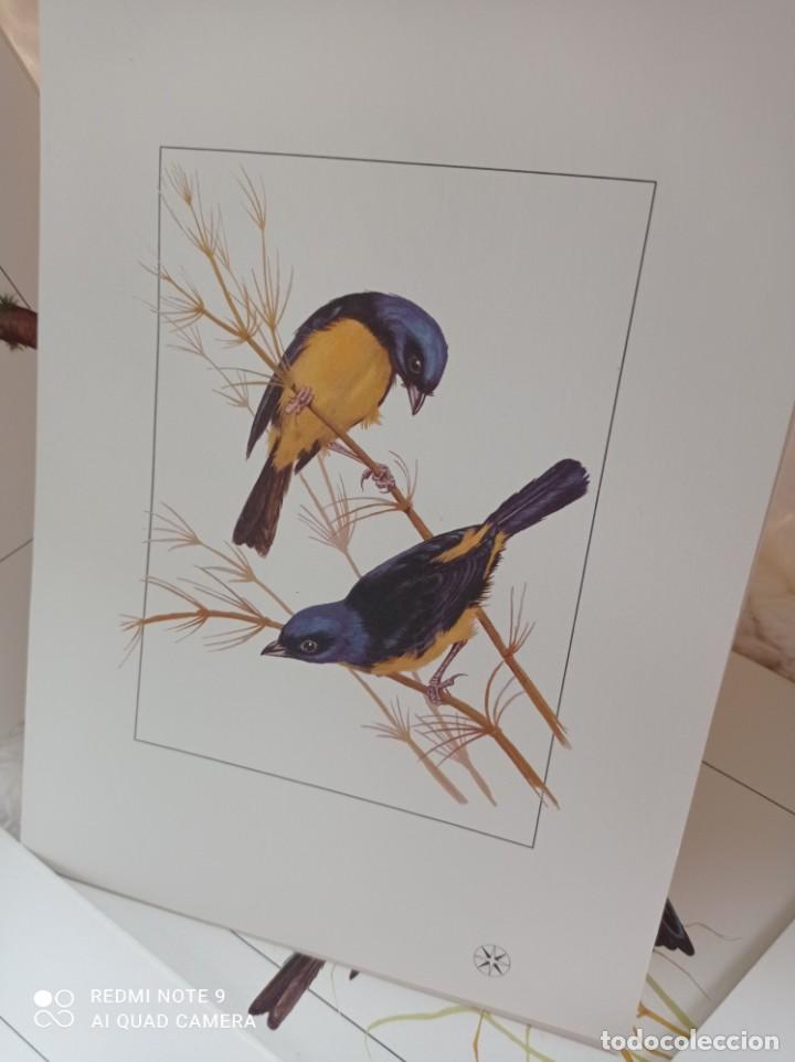 Carteles de Turismo: Lote 10 postales. Aves de Brasil. Rutas internacionales Varig - Foto 11 - 239822430
