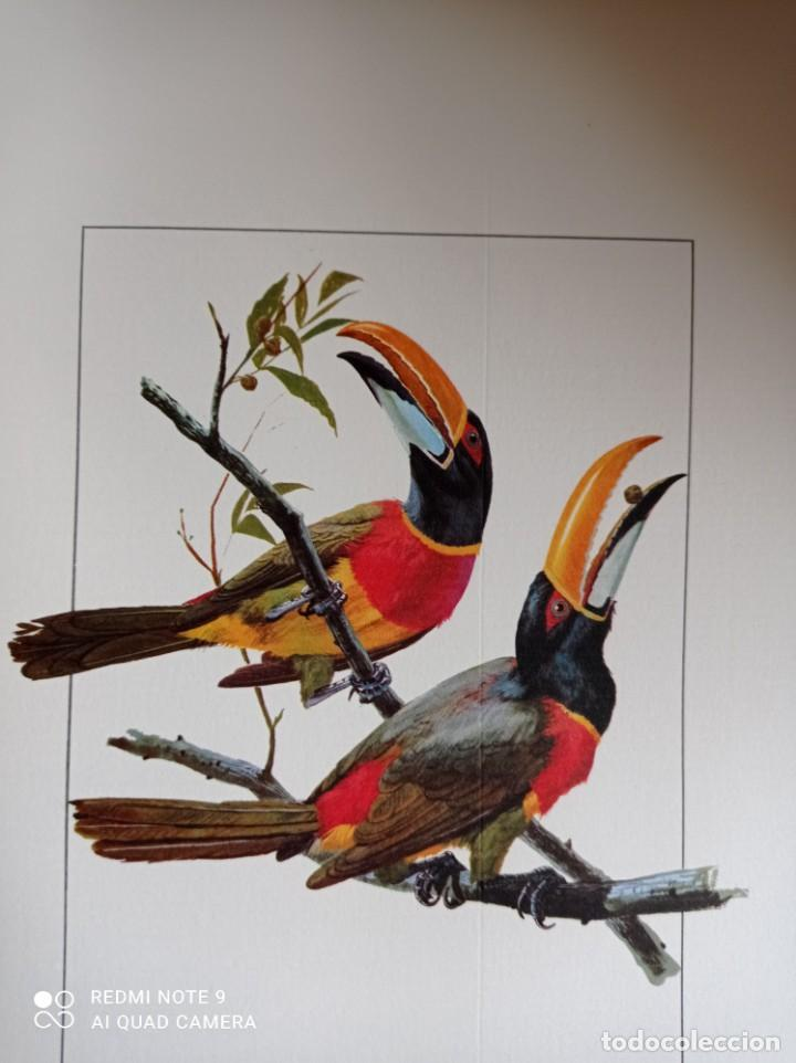Carteles de Turismo: Lote 10 postales. Aves de Brasil. Rutas internacionales Varig - Foto 12 - 239822430