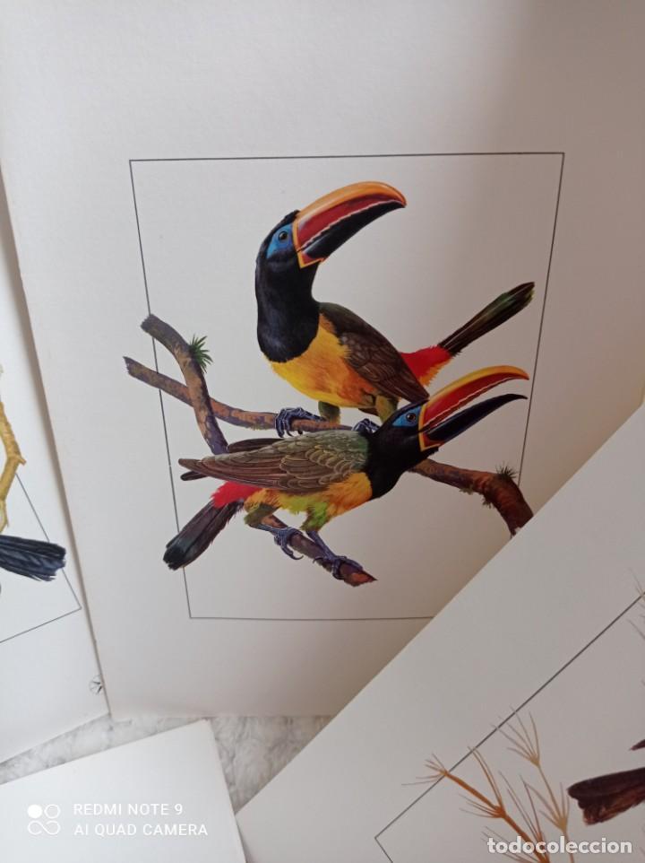 Carteles de Turismo: Lote 10 postales. Aves de Brasil. Rutas internacionales Varig - Foto 13 - 239822430