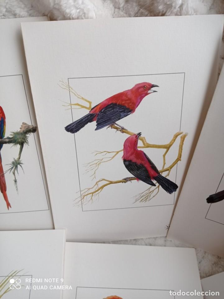 Carteles de Turismo: Lote 10 postales. Aves de Brasil. Rutas internacionales Varig - Foto 14 - 239822430