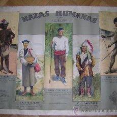 Carteles: RAZAS HUMANAS SEGUN BLUMENBACH LITOGRAFIA DE COLMENA. Lote 27098887