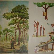 Carteles: CARTEL ANEXO AL LIBRO EL LENGUAJE EN LA ESCUELA DE PARVULOS 5-6AÑOS. 51.5X69.5.EL ARBOL.1969. Lote 27428286