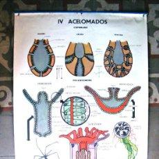 Carteles: ANTIGUO CARTEL POSTER DE ESCUELA. Lote 21073830