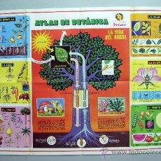 Carteles: PÓSTER PETETE ATLAS BOTÁNICA COLECCIÓN REVISTA 1982 81 CM X 56,5 CM. Lote 40336478