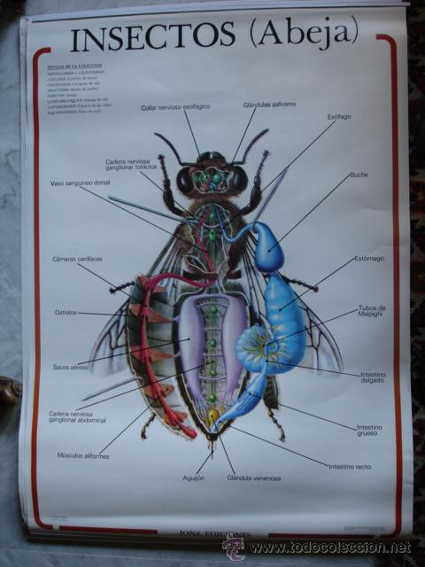 anatomia animal invertebrados.8 murales de 69x9 - Comprar en ...