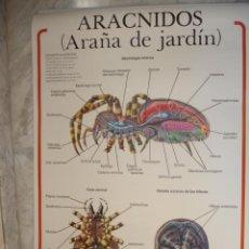 Carteles: ARACNIDOS.ARAÑA DE JARDIN.MURAL COLGAR ENCERADO ESCUELA.ED JOVER.70X95. Lote 35167130