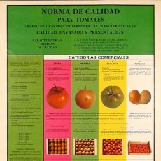 Carteles: CARTEL NORMA DE CALIDAD PARA TOMATES. 1985. ESPAÑA. 50X70. Lote 35997149