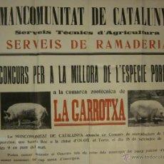 Carteles: CARTEL MANCOMUNITAT DE CATALUNYA-OLOT -CONCURS PER LA MILLORA DE L´ESPECIE PORCINA 1921. Lote 41204939