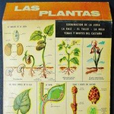 Carteles: LAS PLANTAS. DESPLEGABLE ILUSTRADO. EDICIONES JOVER, BARCELONA.. Lote 46349011