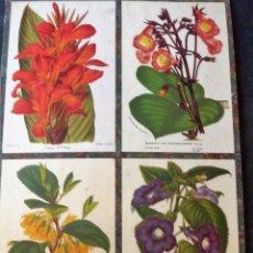 Carteles: BONITO CARTEL CARTON DURO BOTANICA FLORES . 58 / 34 CM REPRODUCCION DE CROMOLITO ANTIGUO . Lote 55014627