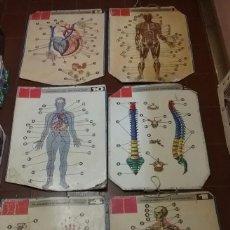Carteles: LOTE DE 6 CARTELES DOBLES DIDÁCTICOS ESCOLARES DE ANATOMÍA HUMANA - DALMAU Y JOVER - AÑO 1960 . Lote 56157609