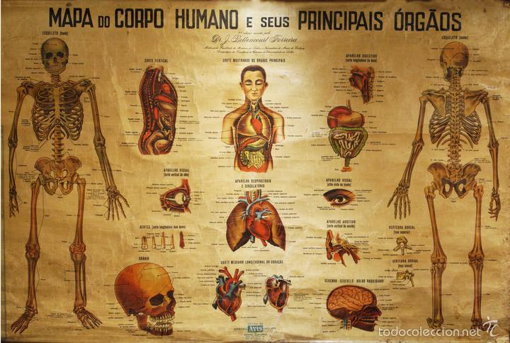 lámina antigua anatomia medicina mapa antiguo c - Comprar en ...