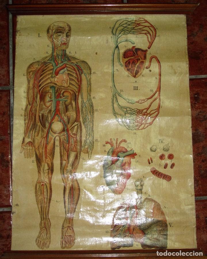muy antiguo cartel lamina mural escolar , cromo - Comprar en ...