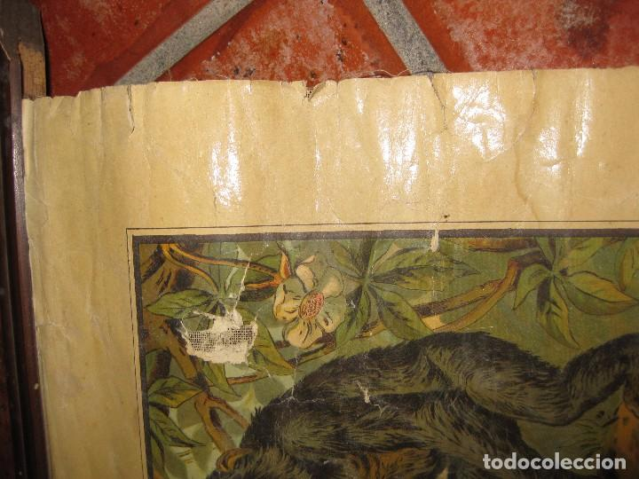 Carteles: muy antiguo cartel lamina mural escolar , cromolitografia entelada germany zoologia . la selva 60/45 - Foto 3 - 62219676