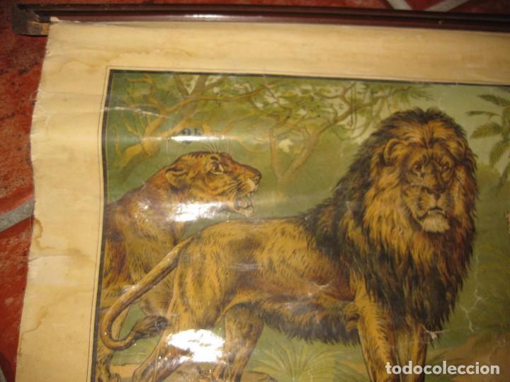 Carteles: muy antiguo cartel lamina mural escolar , cromolitografia entelada germany zoologia . la selva 60/45 - Foto 4 - 62219676