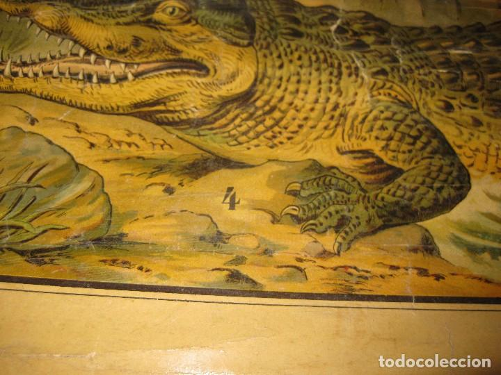 Carteles: muy antiguo cartel lamina mural escolar , cromolitografia entelada germany zoologia . la selva 60/45 - Foto 5 - 62219676