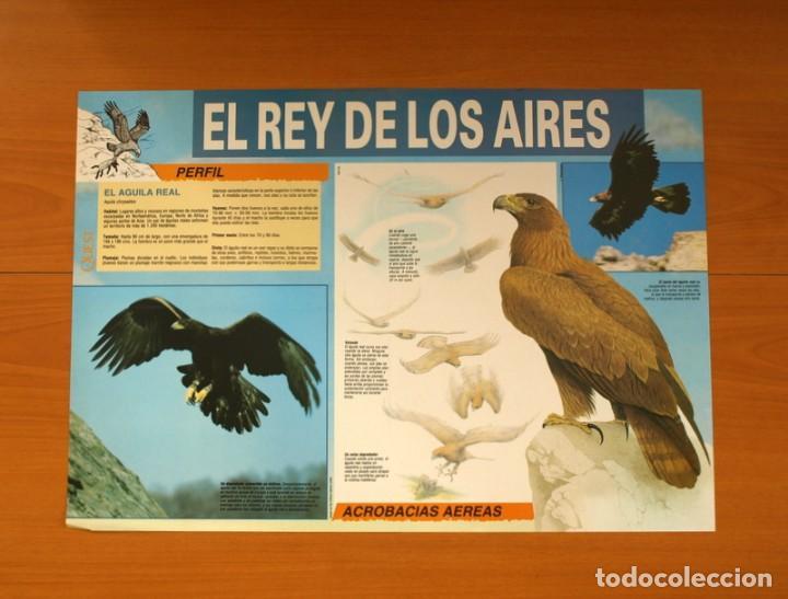 EL REY DE LOS AIRES - EL ÁGUILA REAL - QUEST - PÓSTER TAMAÑO 58X41 (Coleccionismo - Carteles Gran Formato - Carteles Varios)