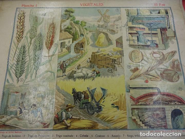 Carteles: Vegetales. EL PAN. Cartel o lámina entelada de ESCUELA. 48 x 38 ctms. Muy decorativa. Años 1900s. - Foto 2 - 87147008