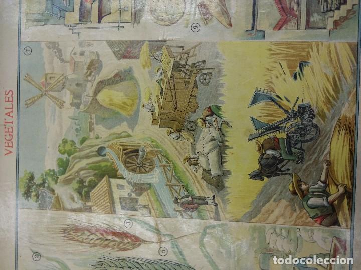 Carteles: Vegetales. EL PAN. Cartel o lámina entelada de ESCUELA. 48 x 38 ctms. Muy decorativa. Años 1900s. - Foto 4 - 87147008