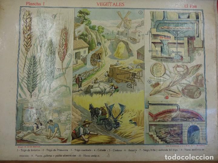 Carteles: Vegetales. EL PAN. Cartel o lámina entelada de ESCUELA. 48 x 38 ctms. Muy decorativa. Años 1900s. - Foto 5 - 87147008