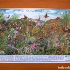 Carteles: LEVANTE, EL MERCANTIL VALENCIANO - PARATGE NATURAL DEL DESERT DE LES PALMES - PÓSTER TAMAÑO 56,5X40. Lote 87239496