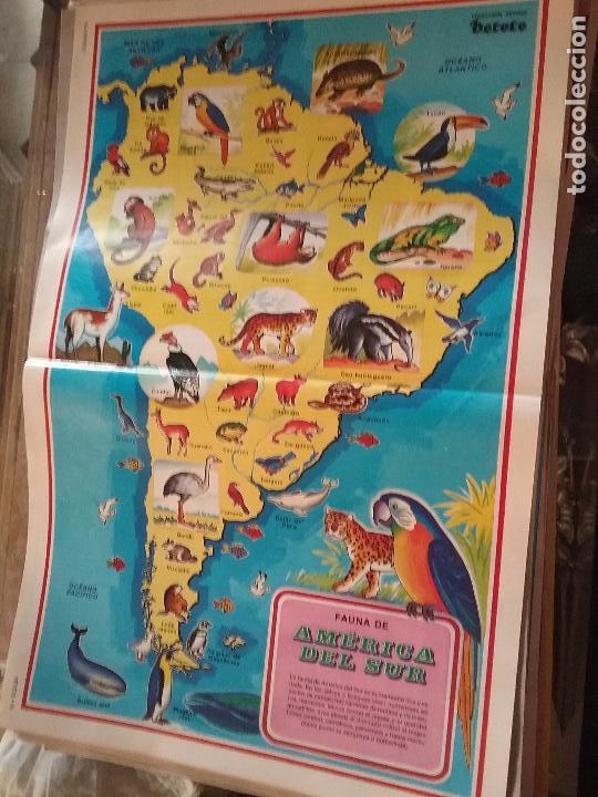 45 X 29 CM GRAN LAMINA EDUCATIVA - CARTEL / POSTER AÑOS 80 - ANIMALES - NATURALEZA - FAUNA AMERICA (Coleccionismo - Carteles Gran Formato - Carteles Varios)