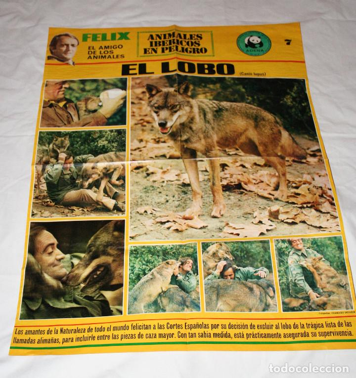 Felix Rodriguez De La Fuente Poster El Lobo Ade Sold Through Direct Sale 98400423