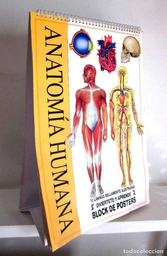 gran display expositor 45x30 cartón anatomía hu - Comprar en ...