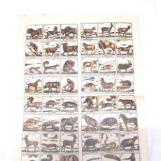 Carteles: AUCA SERIE ANIMALES MAMIFEROS COLOREADOS, PAPEL DE HILO. MED. 33 X 46 CM. Lote 128775063