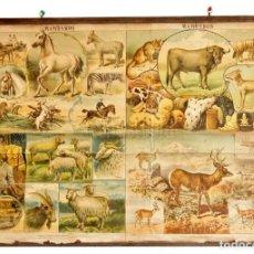Carteles: ÚNICO CARTEL DE ESCUELA ENTELADO. NATURALEZA MAMÍFEROS. ANTONIO JUAN BASTINOS. BARCELONA 1878. Lote 136655030